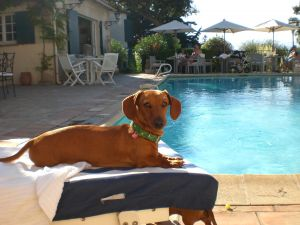 Tourism Trend: US Hotels Going to the Dogs